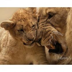 Lion et lionceau - Broderie...