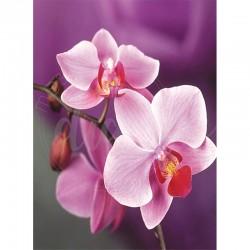 Branche d'orchidées roses -...